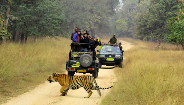 Tiger-i-Pench img