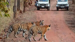 Bandhavgarh-National-parks img
