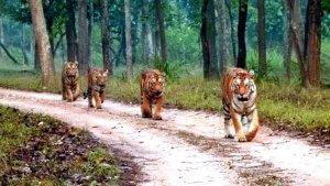 Madhya-Pradesh-Wildlife-Tour img