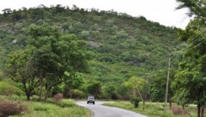 Road-to-Bandipur-National-Park-in-Karnataka img