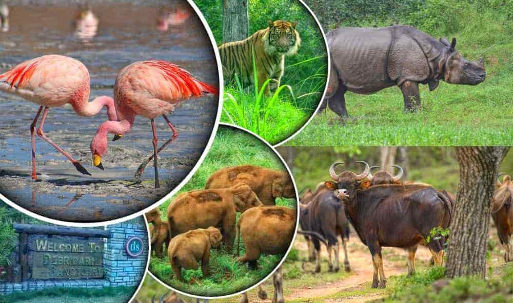 Wildlife Tours Odisha