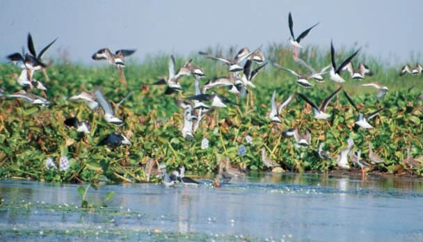 Bird-Sanctuary-at-Chilika-Lake-Odisha1