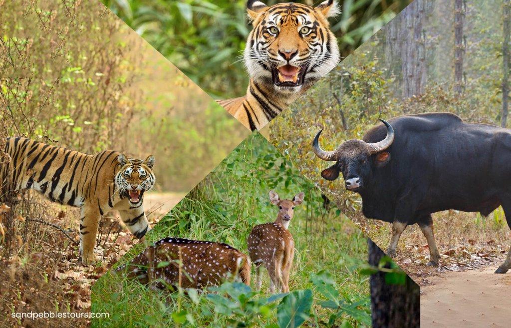 جولة في الحياة البرية في مادهيا براديش