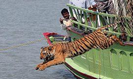 Kolkata - Gangasagar - Sundarbans